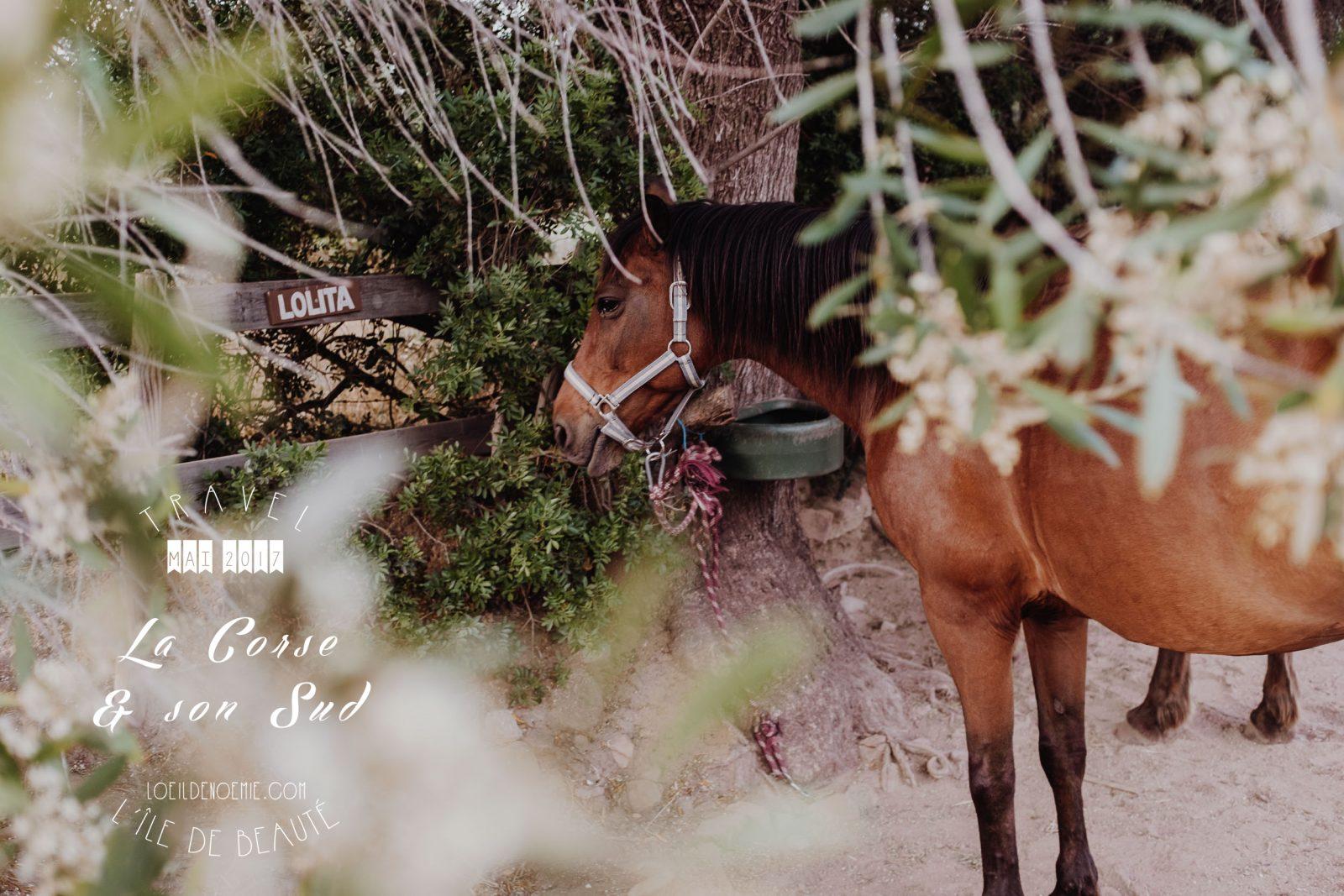 Photos & bonnes adresses Corse du Sud © L'oeil de Noémie #LDN