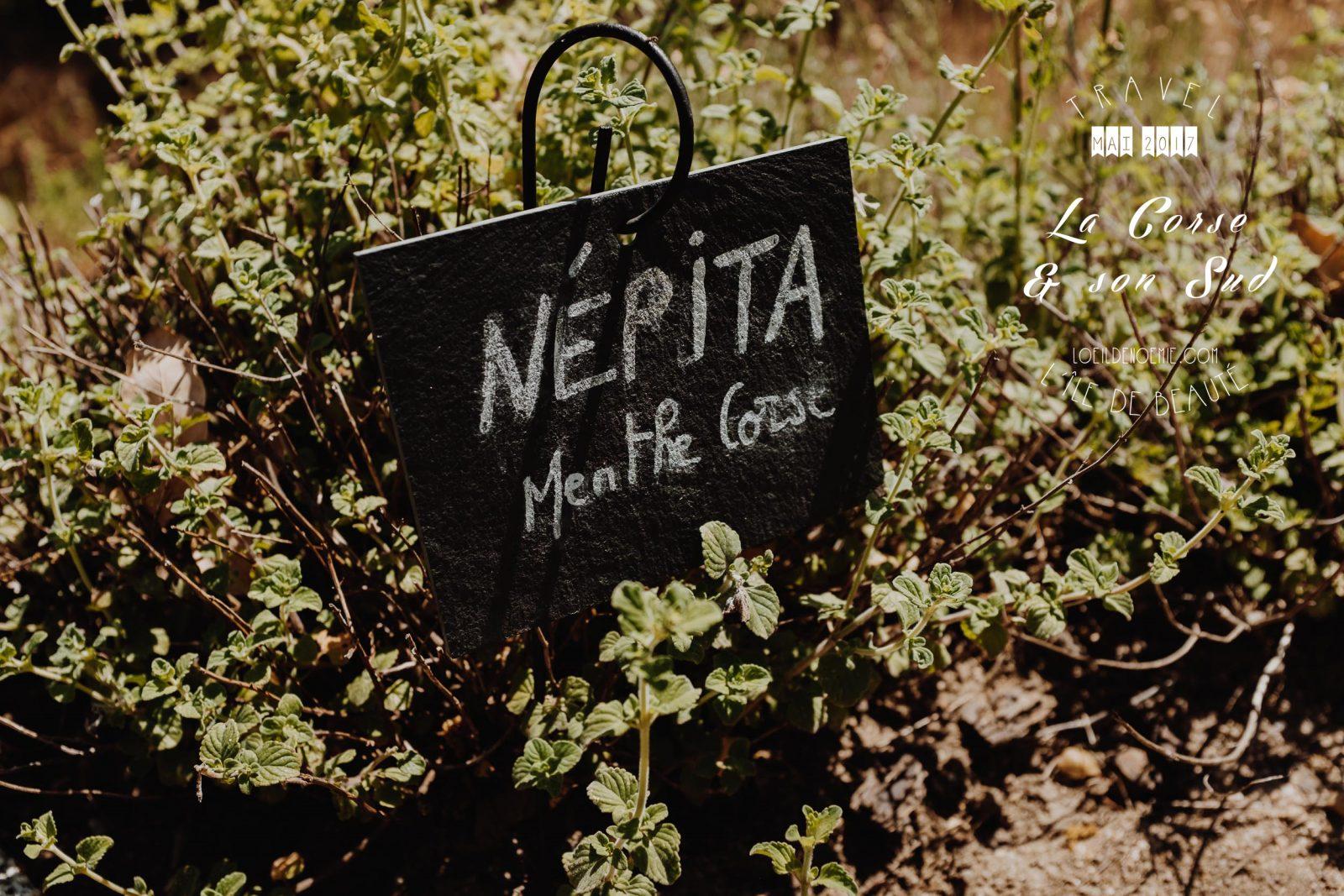 Photos & bonnes adresses Corse du Sud. Huiles essentielles Corse, les simples et divines. L'oeil de Noémie photographe et blogueuse voyage en Corse.
