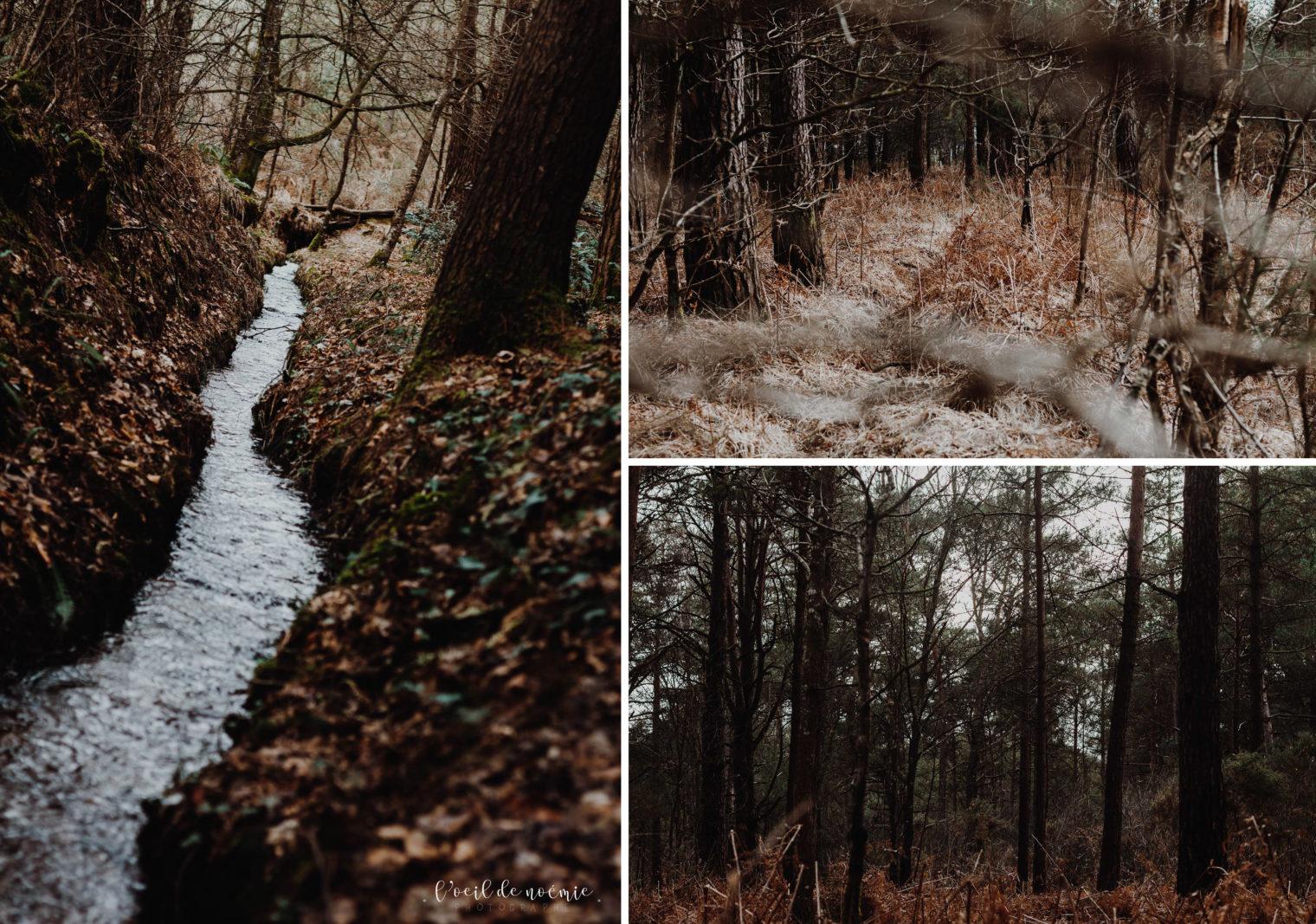 photographe mariage Bretagne, Île et Vilaine, forêt de Brocéliande