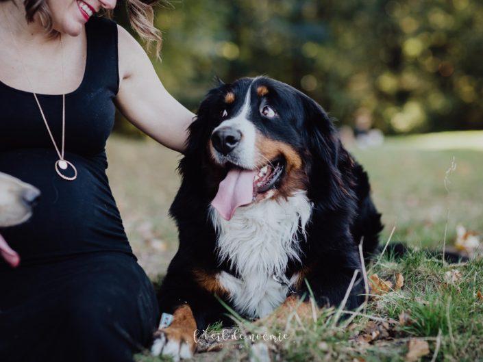 photos de grossesse en pleine nature, photos de famille avec ses chiens, l'oeil de noémie photographe grossesse auvergne
