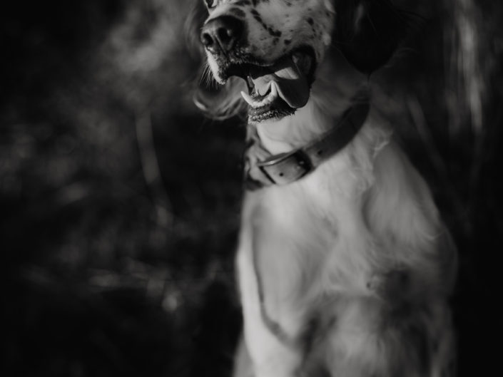 séance photos avec son animal de compagnie en Auvergne, L'oeil de Noémie photographe animalier Clermont-ferrand Puy de Dôme